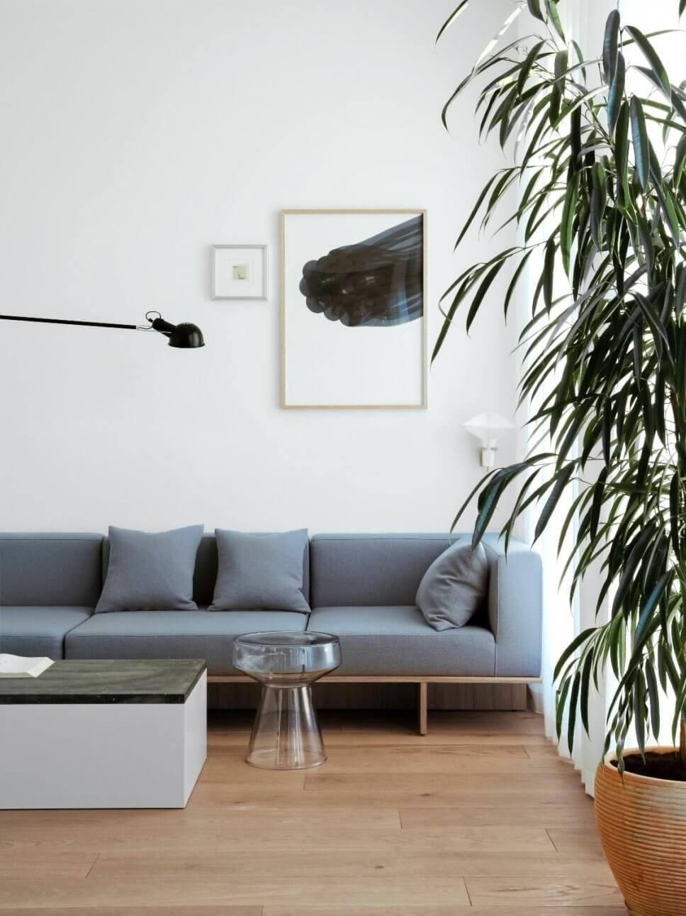 Modernes Wohnzimmer mit Sofa, Coffeetable und Zimmerpflanze