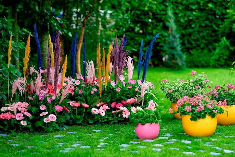 Garten mit bunten Blumenkasten gefüllt Gerbera, Pelargonien und Pampasgras in Gelb, Violett, Blau und Rosa