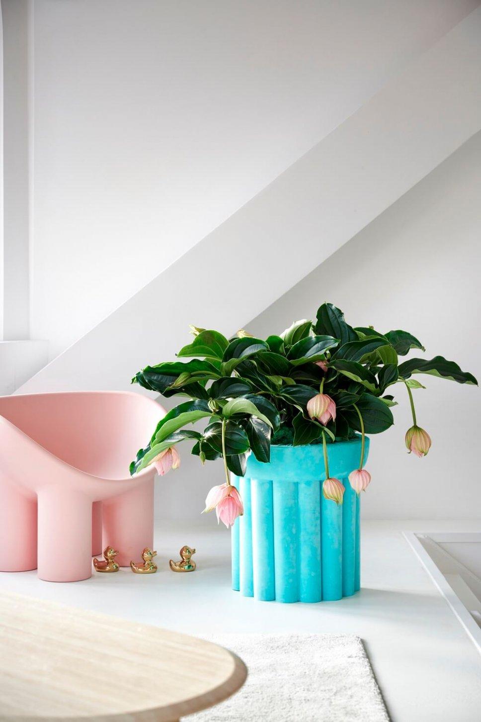 Moderner Wohnraum mit blauem Blumenkasten gefüllt mit Medinilla