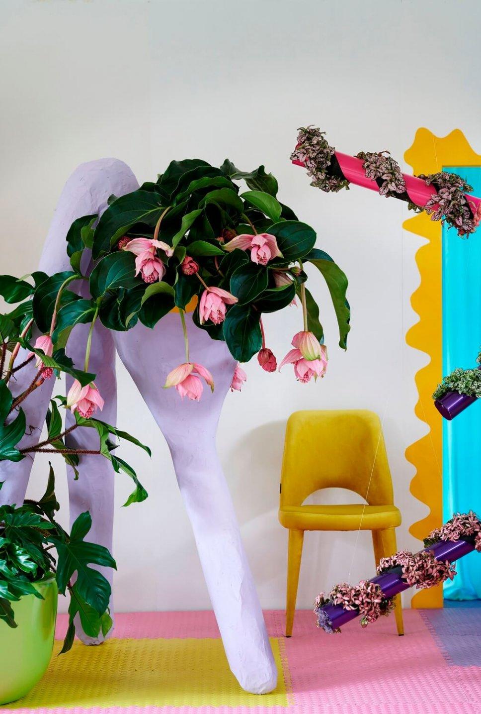 Moderner Wohnraum mit lila schrillem Blumenkasten gefüllt mit Medinilla