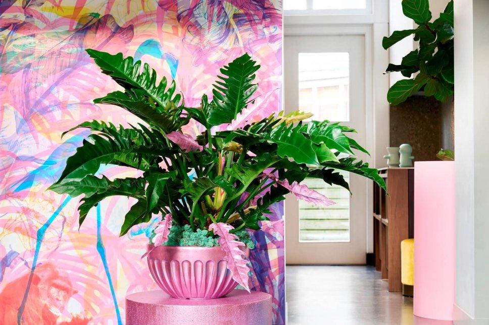 Moderner Wohnraum mit rosa Blumenkasten gefüllt mit Philodendron