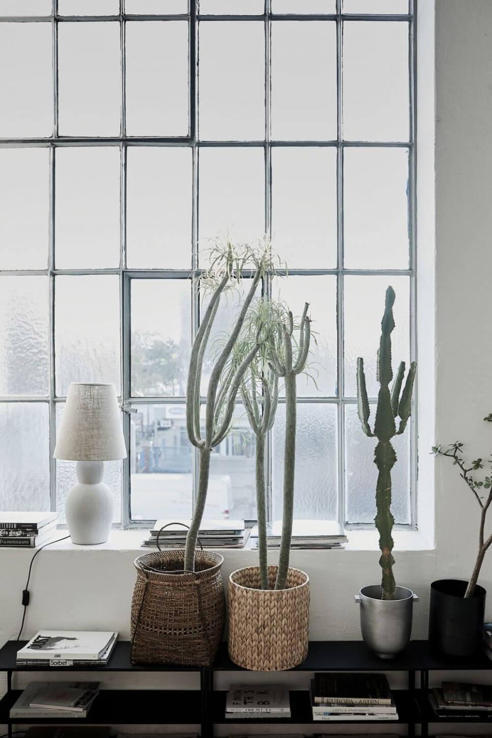 Zimmerpflanzen vor Industriefenster im Loft