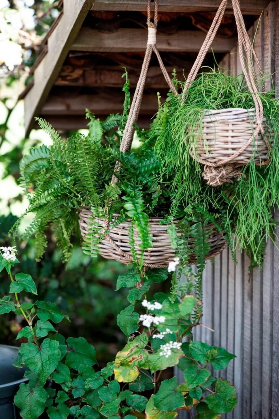 Bepflanzte Blumenampeln in Körben vor schwarzer Holzwand