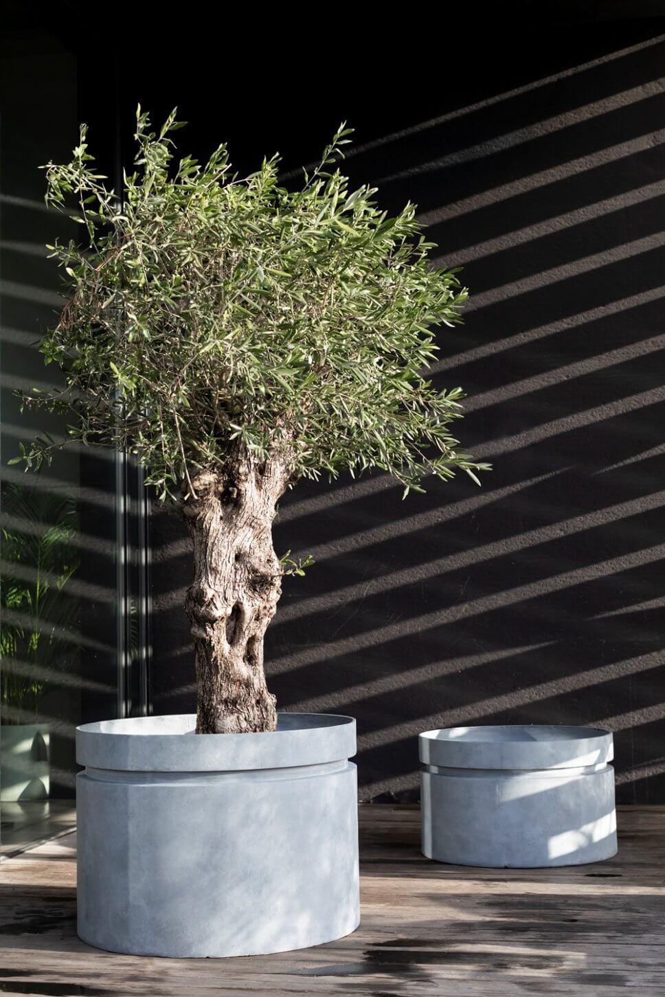 Olivenbaum in grauem Blumenkübel auf Terrasse