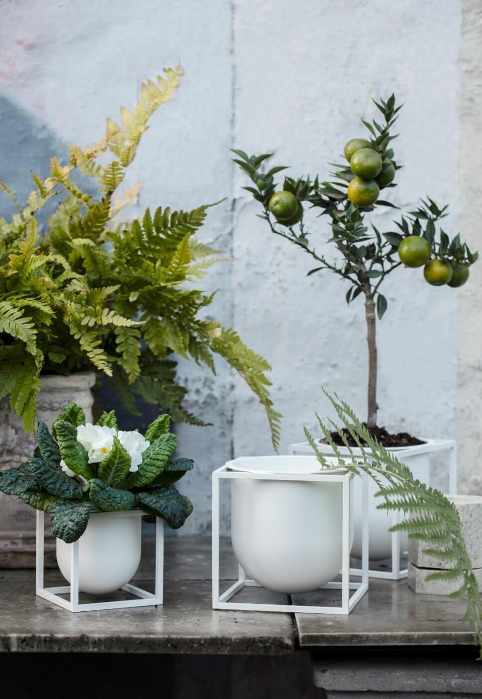 Farn, Zitrus- und Blühpflanzen in Schalen, die in weißen Eisenkuben hängen