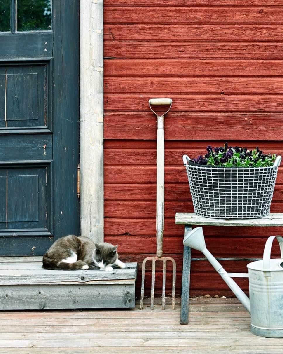 Bepflanzter Korb auf Bank, Gießkanne und Grabegabel stehen neben einem Hauseingang mit Katze