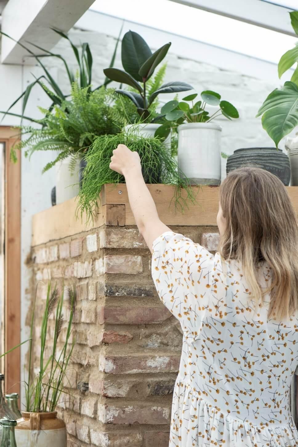 Frau arrangiert Zimmerpflanzen auf einer Mauer im Gewächshaus