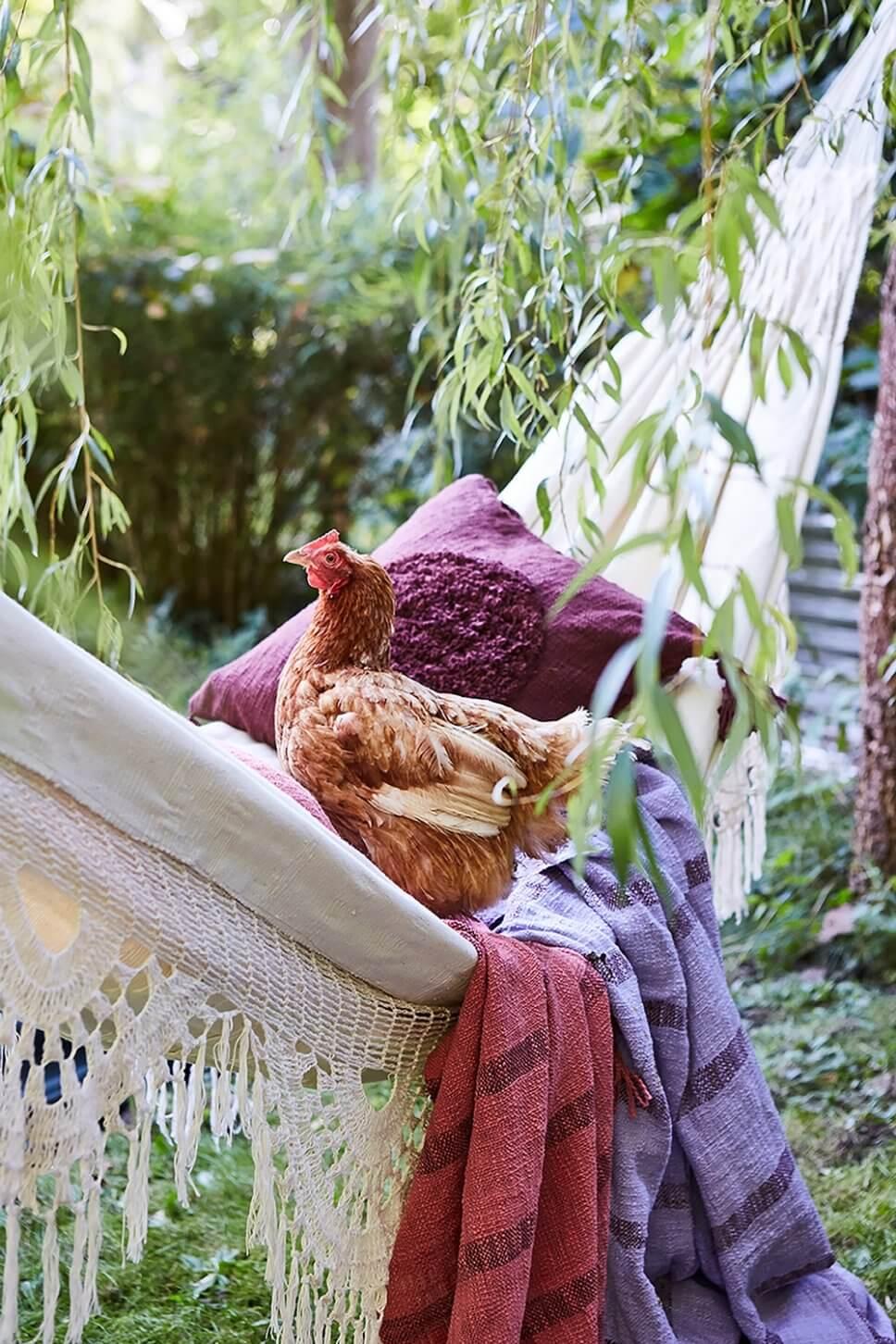 Hängematte mit vielen Kissen und Decken sowie einem Huhn